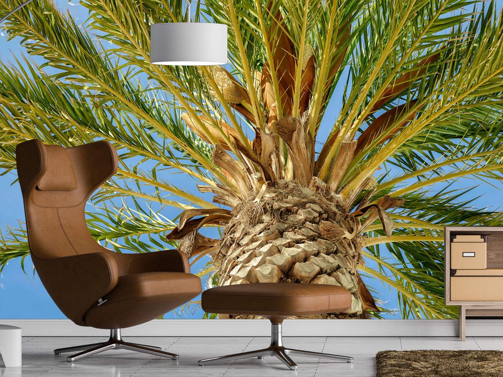 Palmbomen - Tropische palmboom - Tienerkamer 19