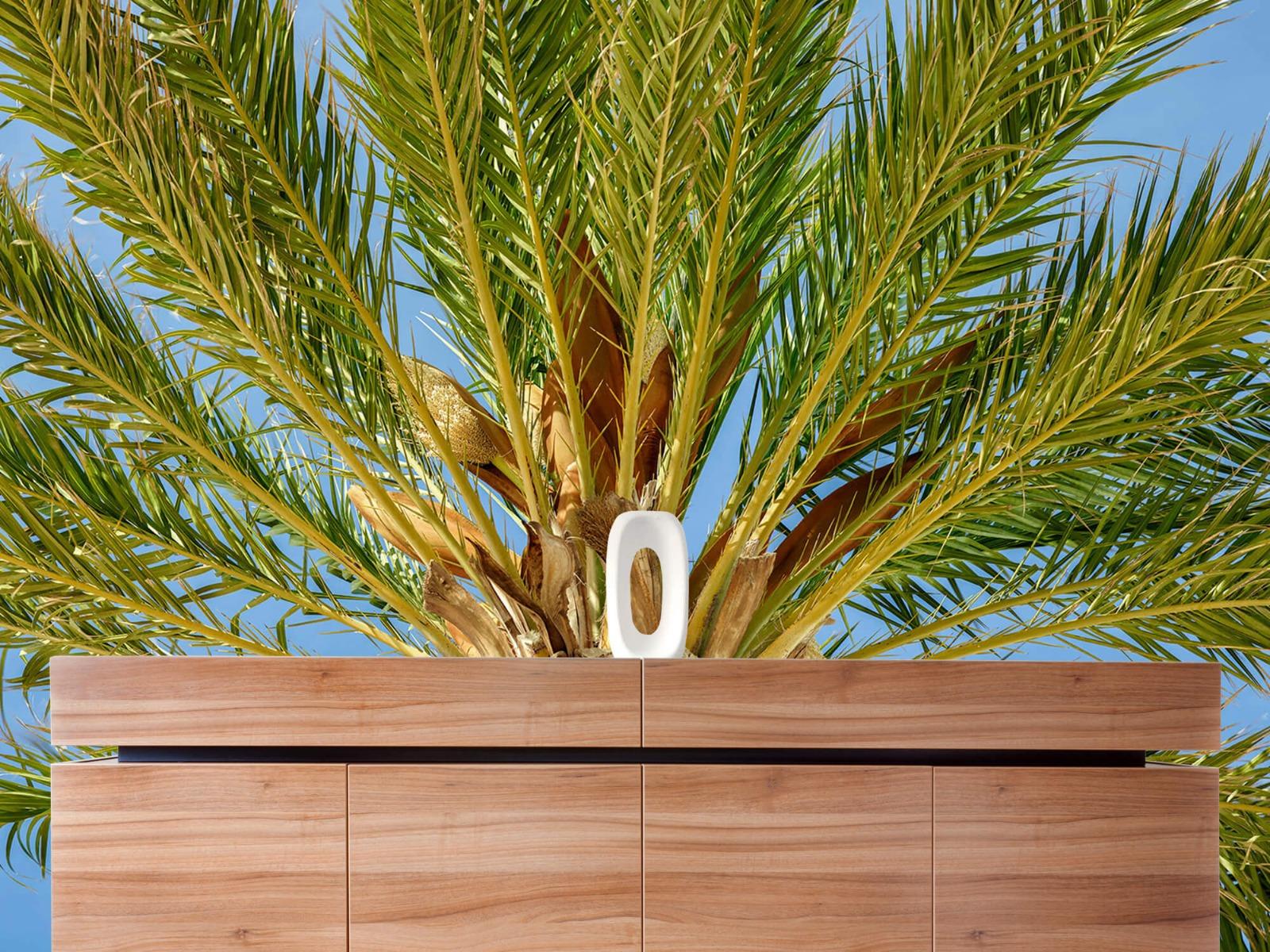 Palmbomen - Tropische palmboom - Tienerkamer 20