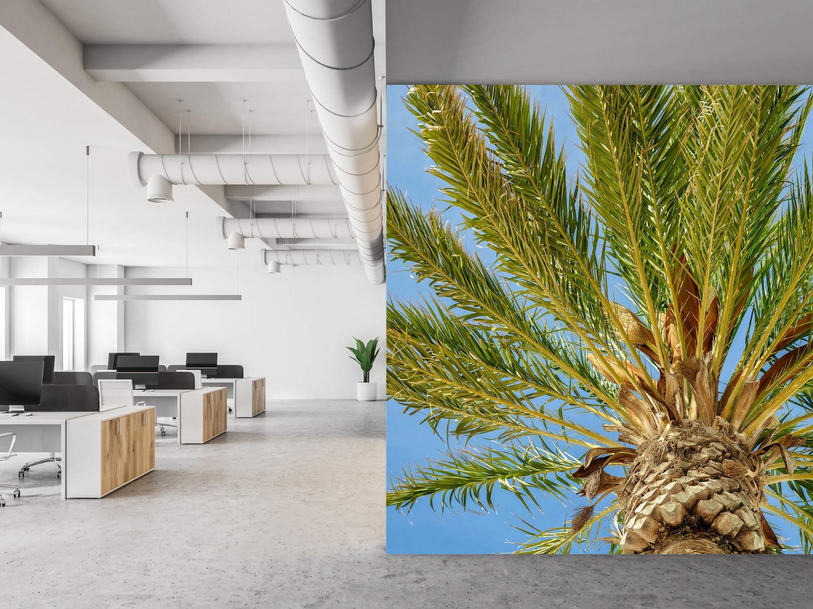 Palmbomen - Tropische palmboom - Tienerkamer 21