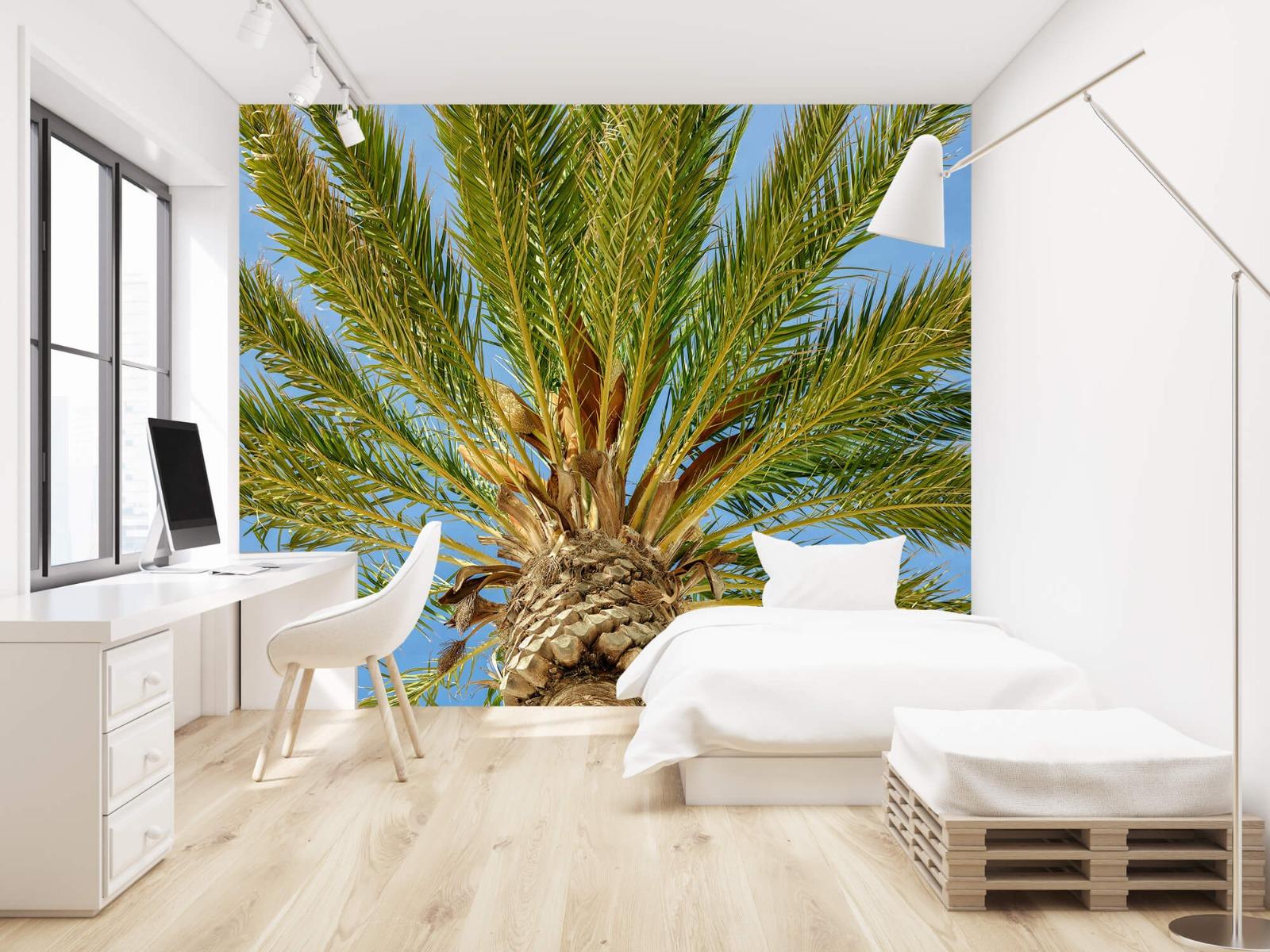 Palmbomen - Tropische palmboom - Tienerkamer 22