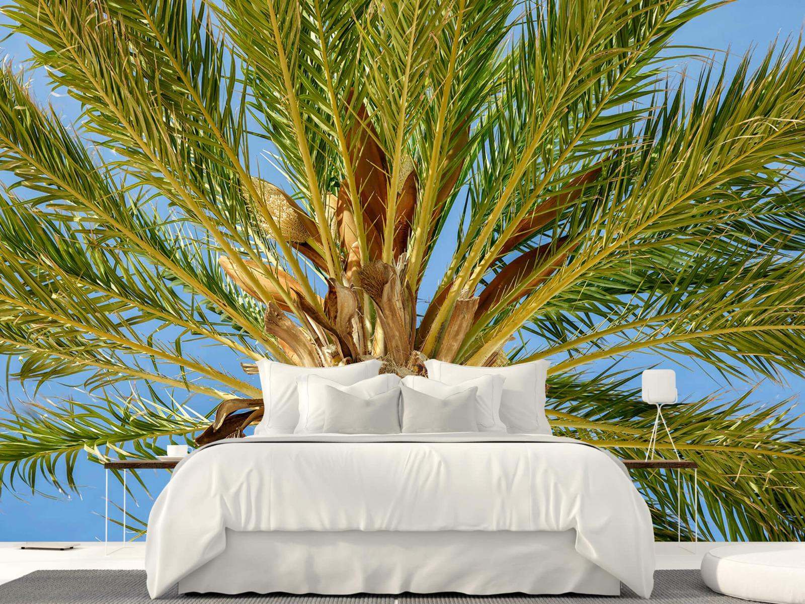 Palmbomen - Tropische palmboom - Tienerkamer 23