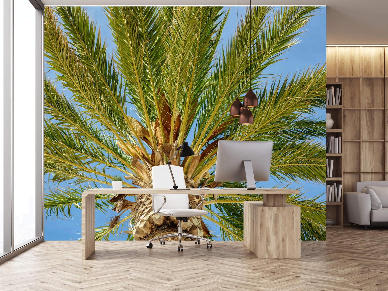Palmbomen - Tropische palmboom - Tienerkamer 24