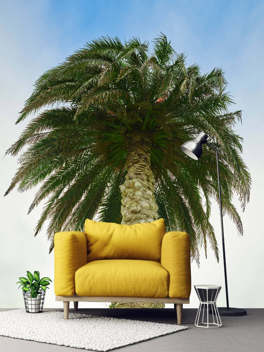 Palmbomen - Palm - Gang 2