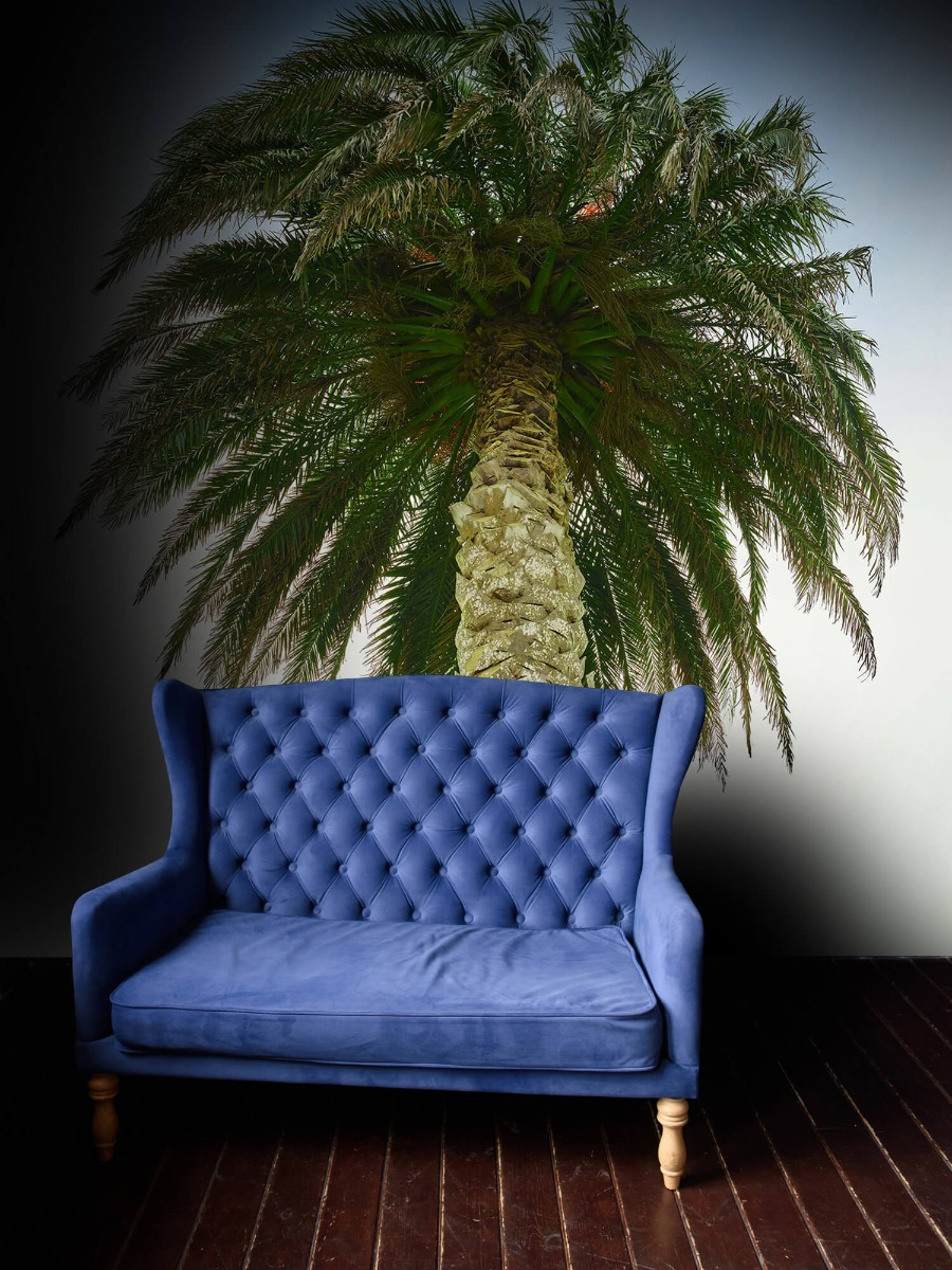 Palmbomen - Palm - Gang 4