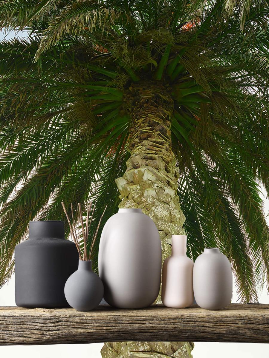 Palmbomen - Palm - Gang 5