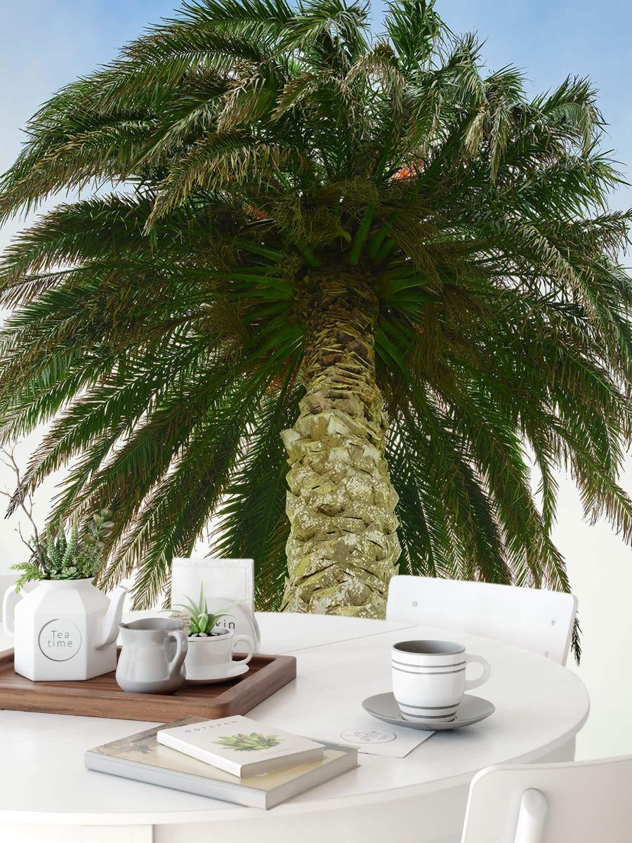 Palmbomen - Palm - Gang 9