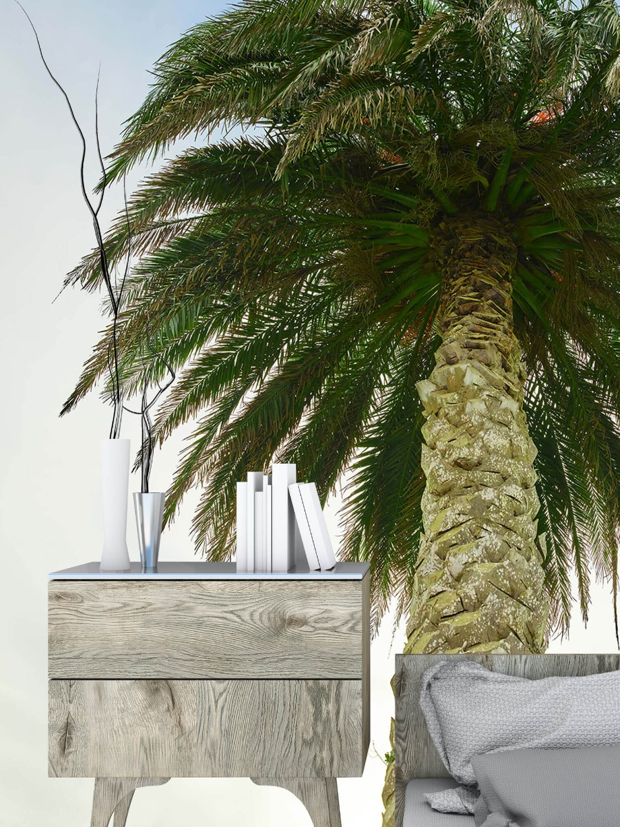 Palmbomen - Palm - Gang 10