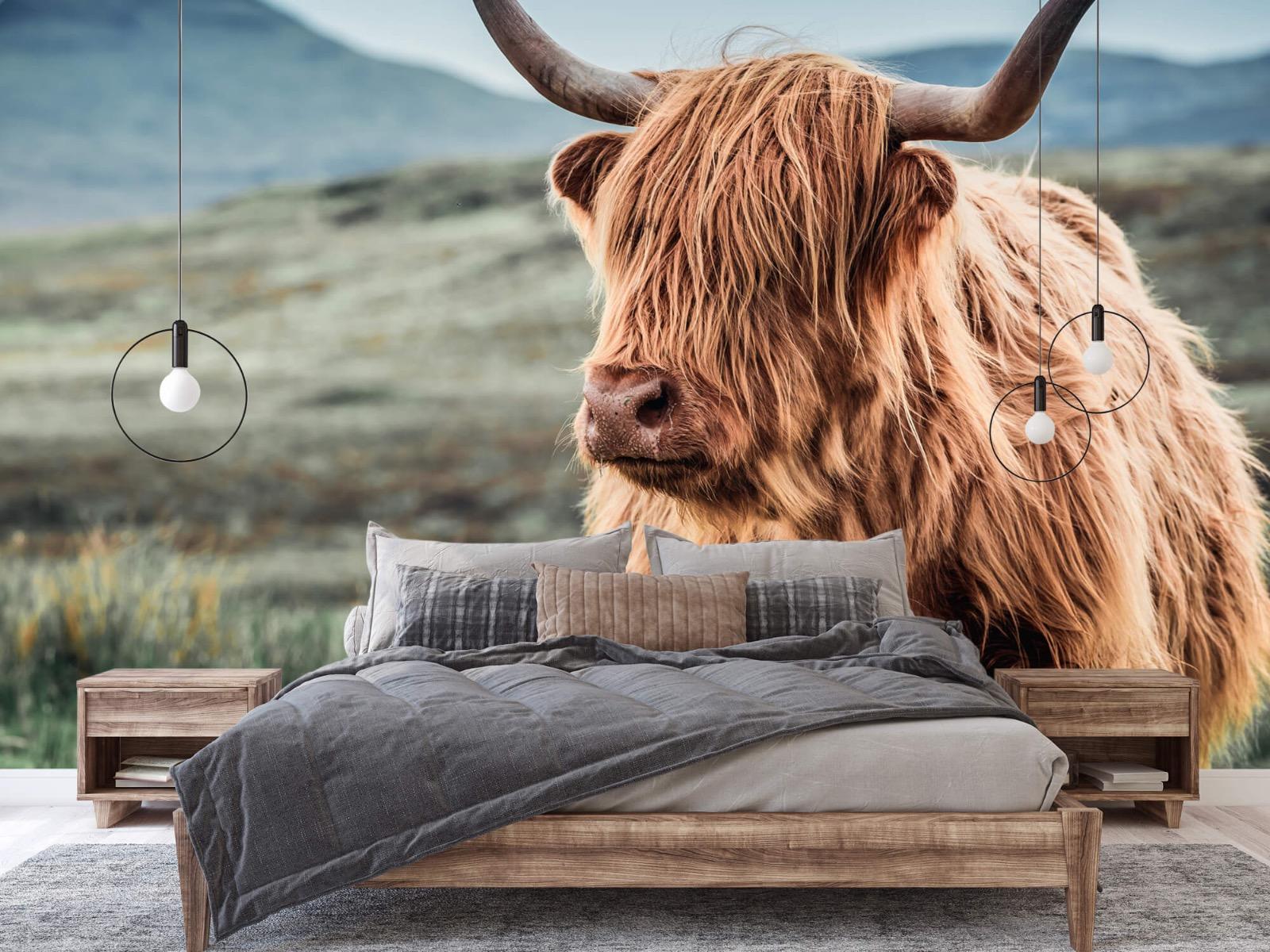 Hooglanders - Schotse hooglander in de heuvels - Woonkamer 1