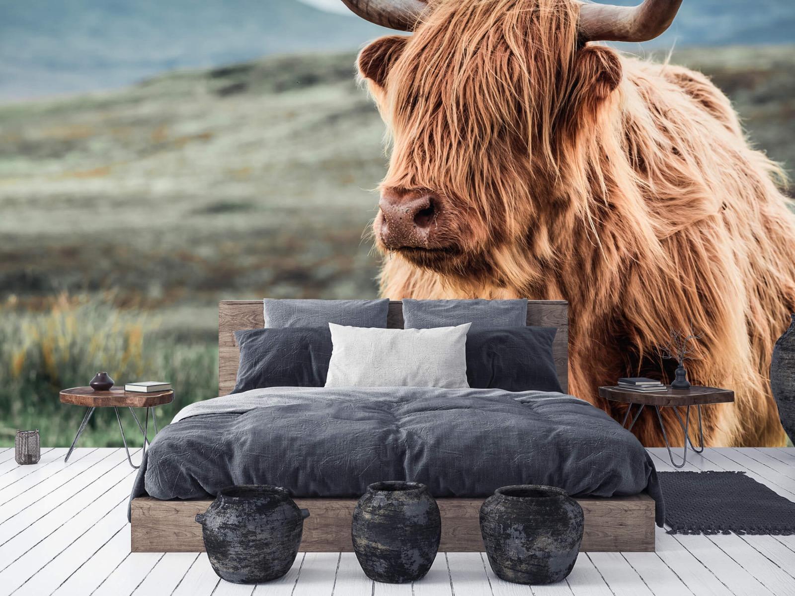 Hooglanders - Schotse hooglander in de heuvels - Woonkamer 5