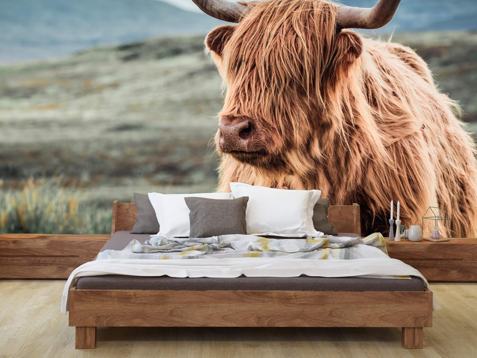 Hooglanders - Schotse hooglander in de heuvels - Woonkamer 7