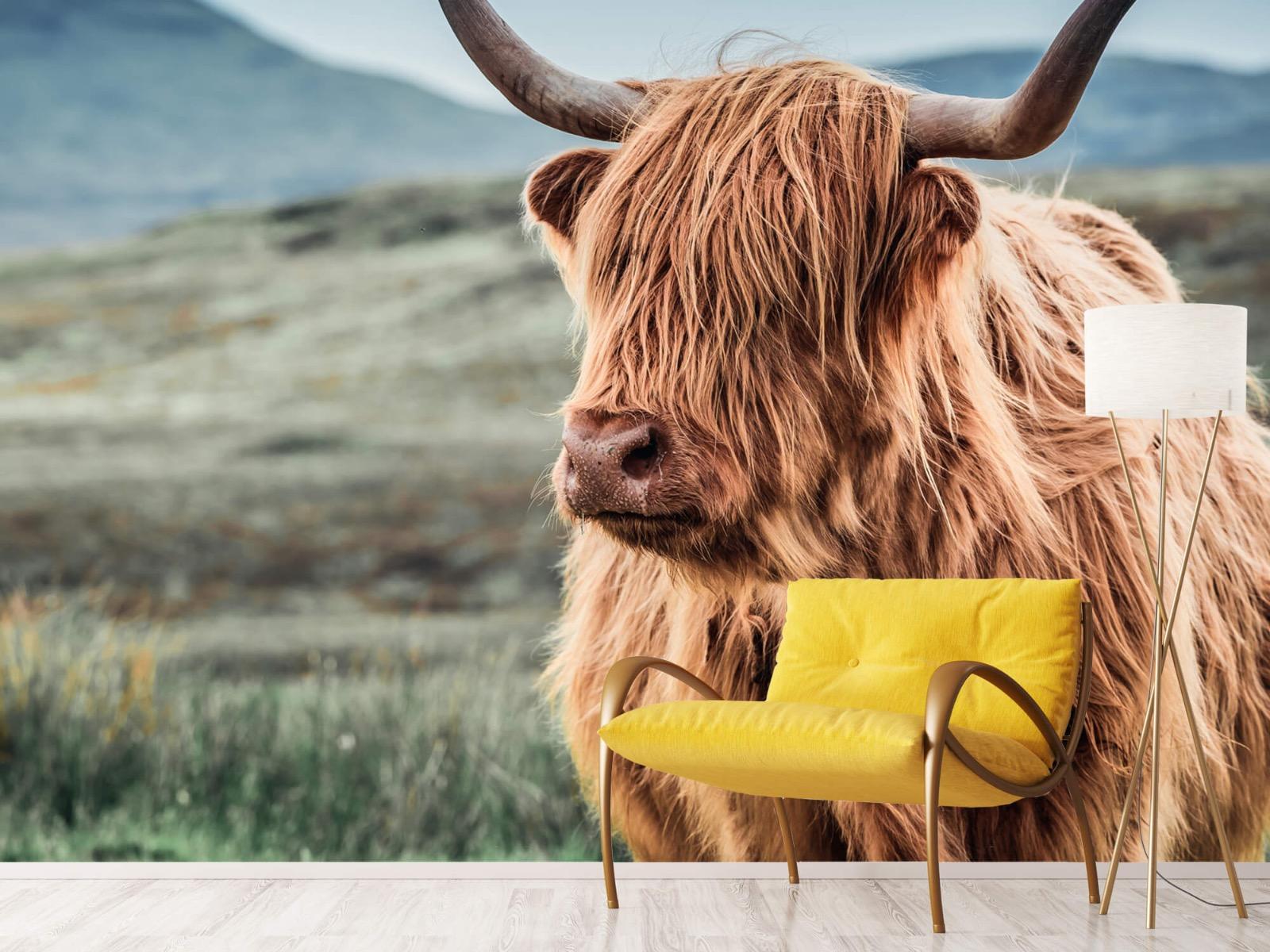 Hooglanders - Schotse hooglander in de heuvels - Woonkamer 10