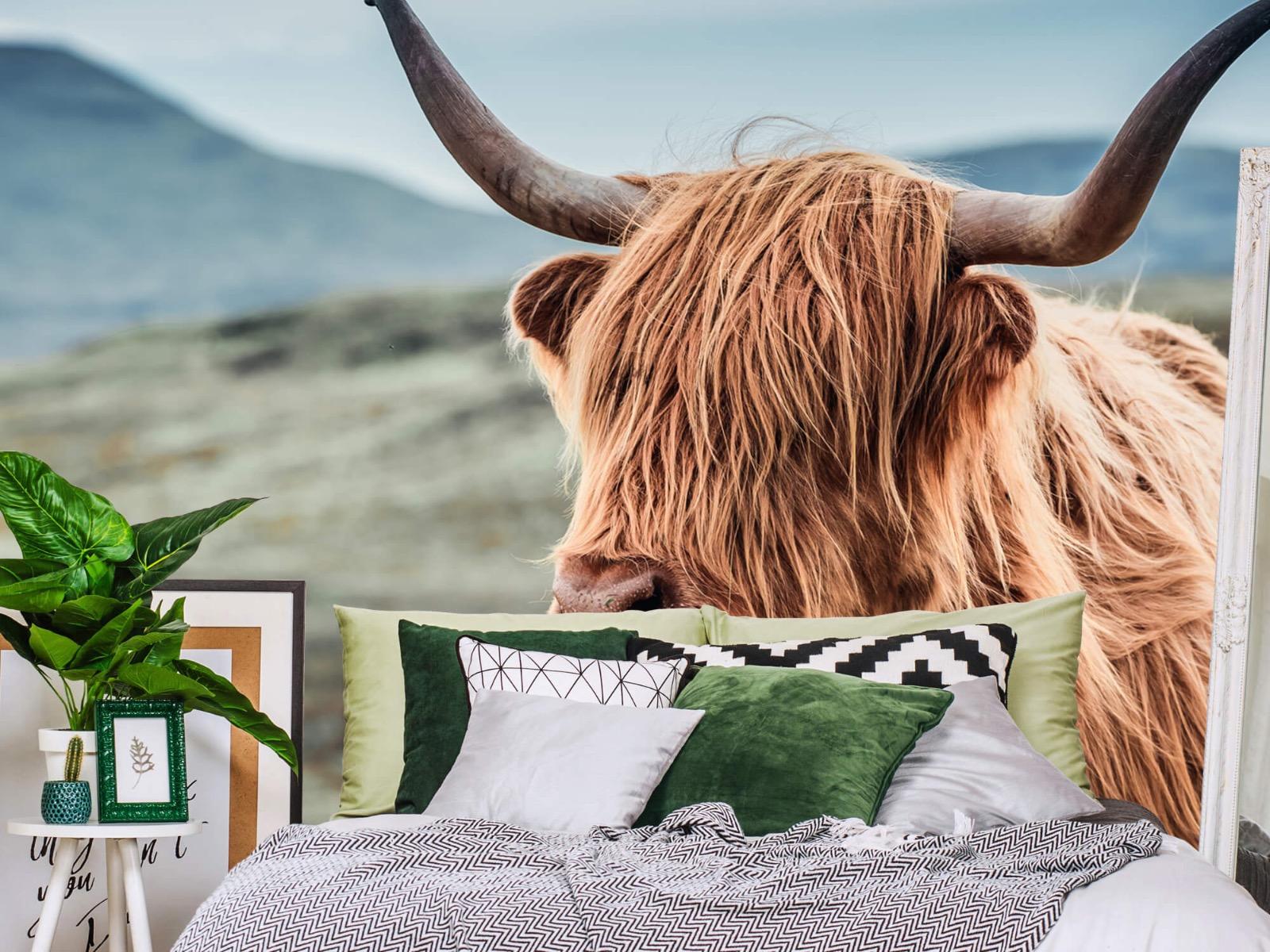 Hooglanders - Schotse hooglander in de heuvels - Woonkamer 12