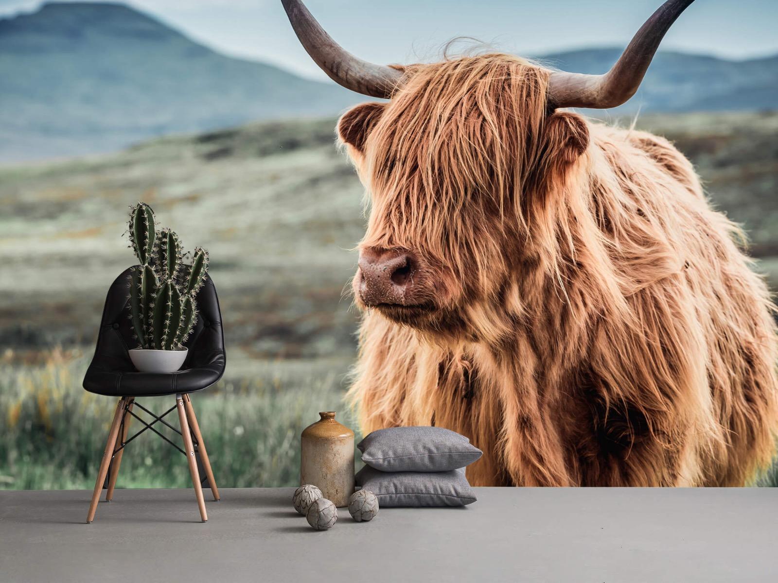 Hooglanders - Schotse hooglander in de heuvels - Woonkamer 13