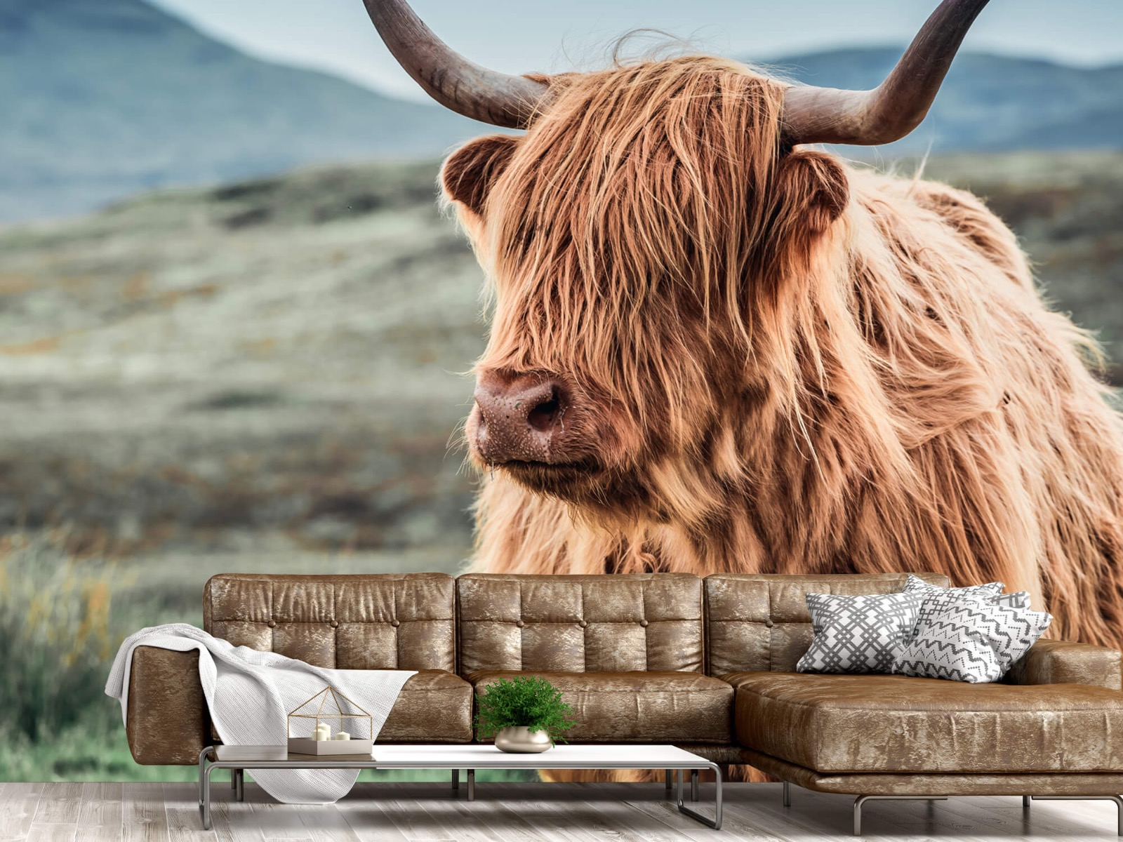 Hooglanders - Schotse hooglander in de heuvels - Woonkamer 14