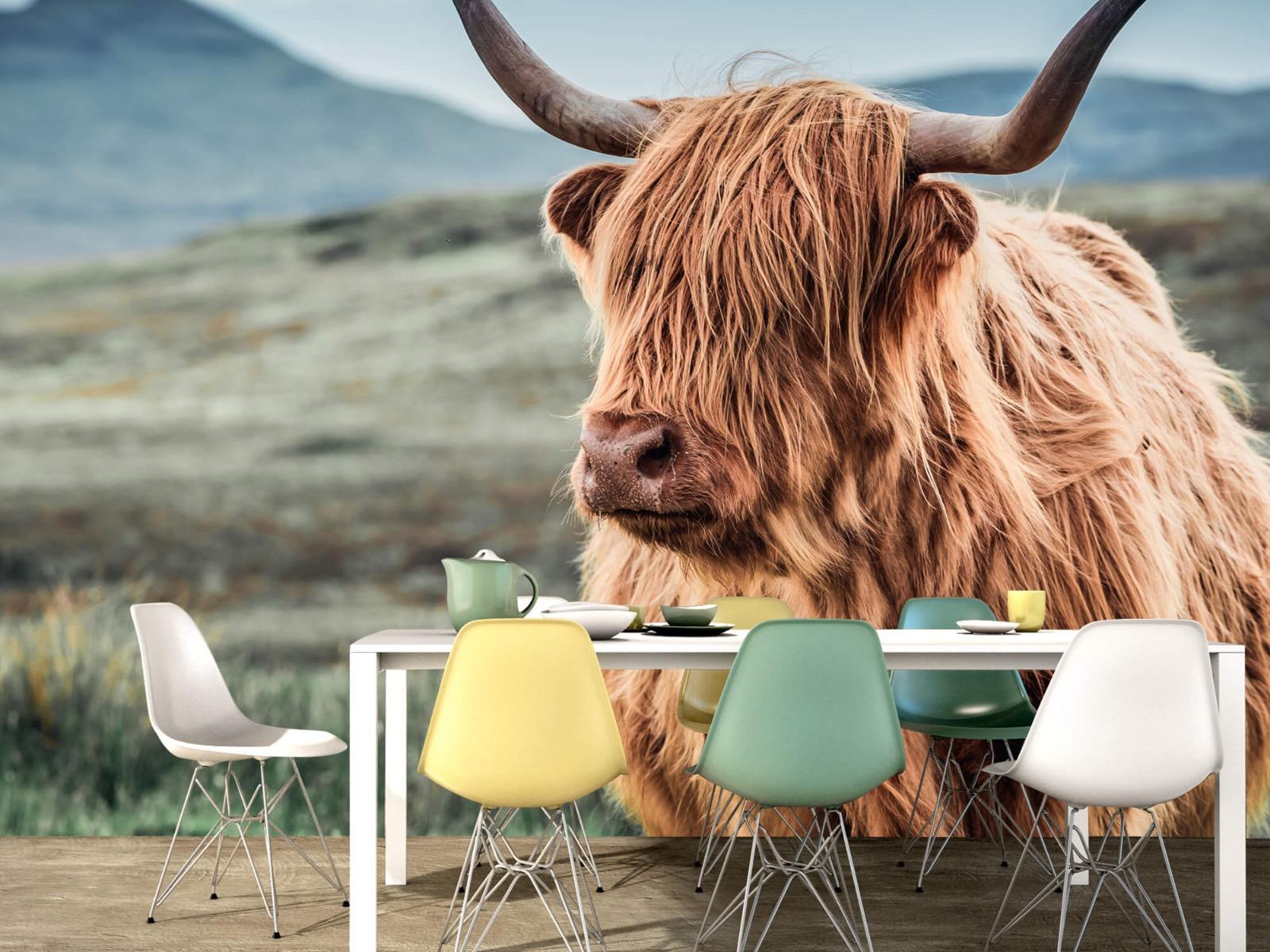 Hooglanders - Schotse hooglander in de heuvels - Woonkamer 15