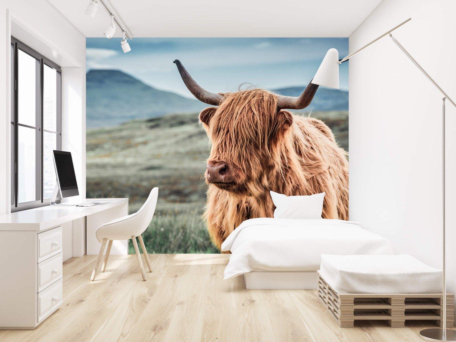 Hooglanders - Schotse hooglander in de heuvels - Woonkamer 22
