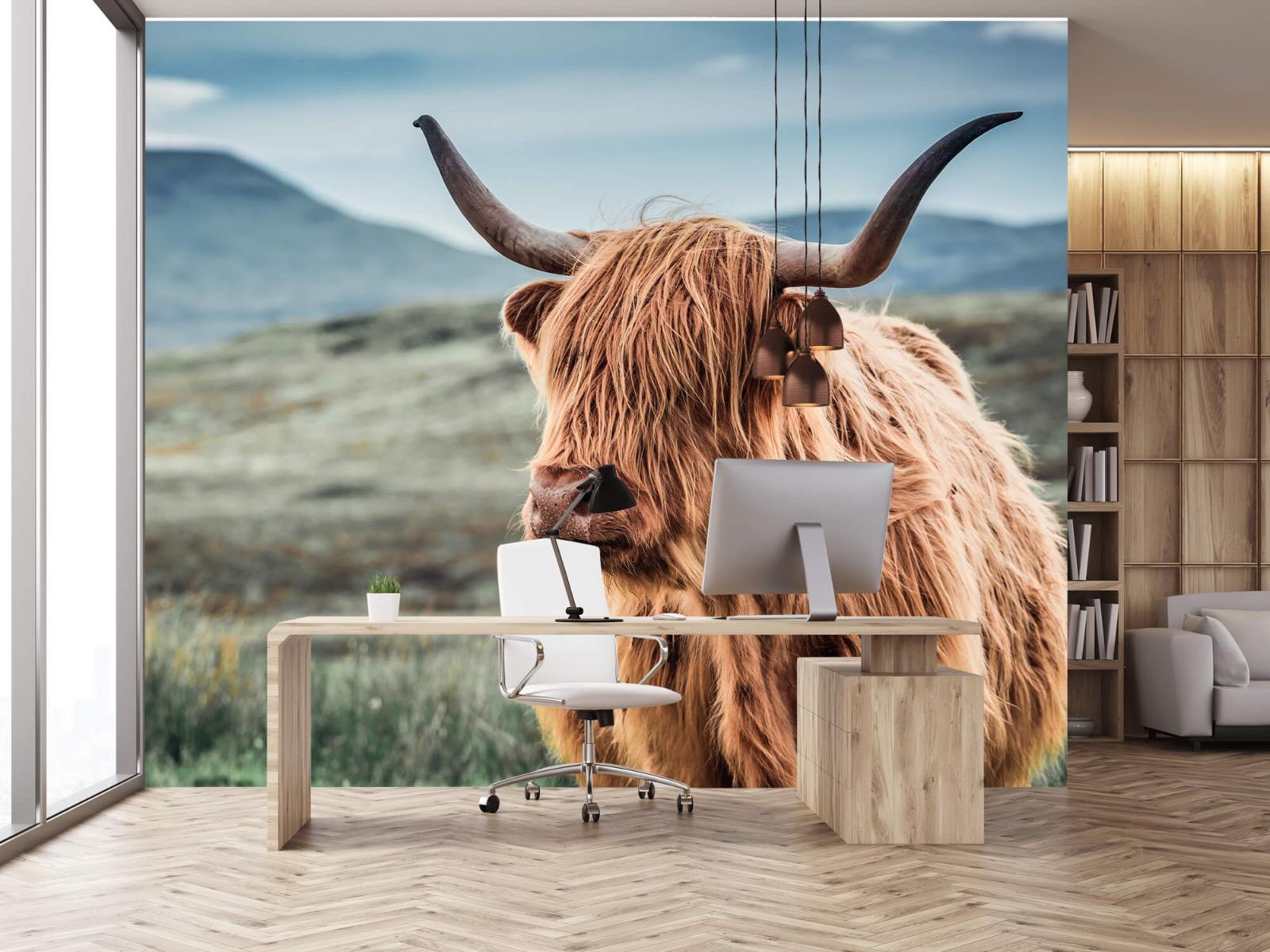 Hooglanders - Schotse hooglander in de heuvels - Woonkamer 24
