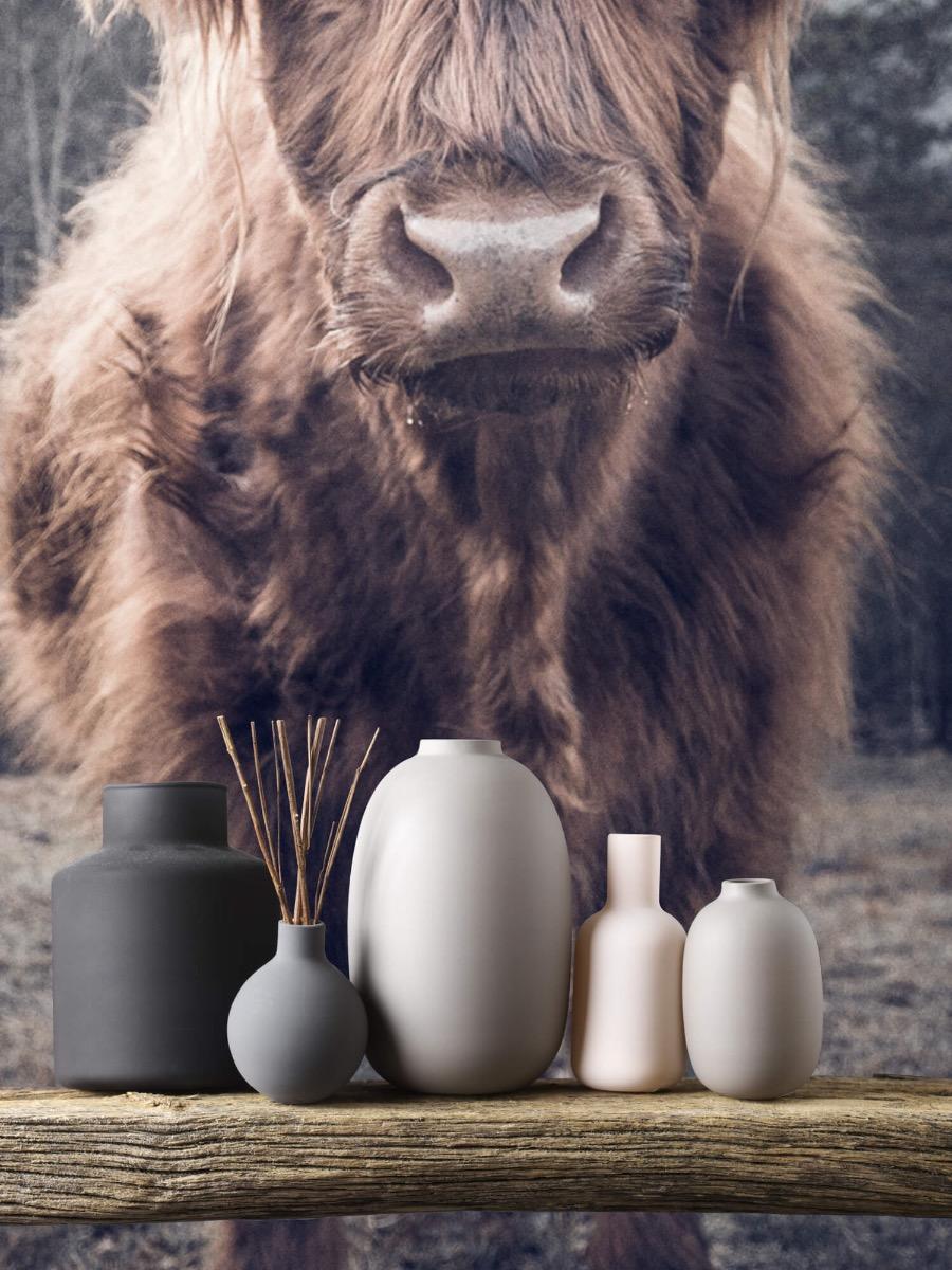 Hooglanders - Schotse hooglander bij het bos - Hal 4