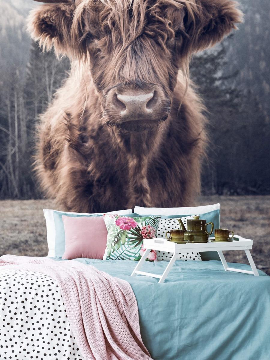 Hooglanders - Schotse hooglander bij het bos - Hal 5