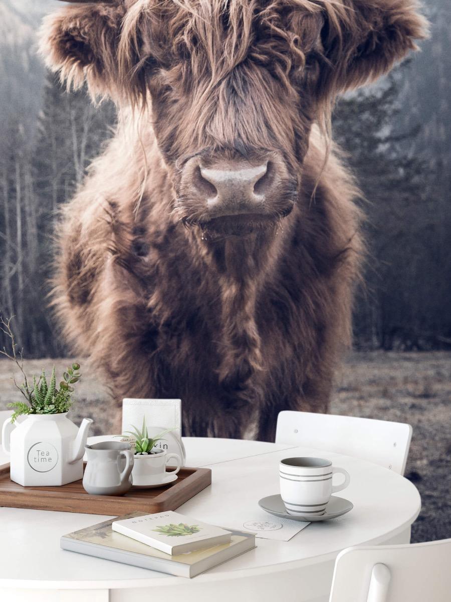 Hooglanders - Schotse hooglander bij het bos - Hal 8