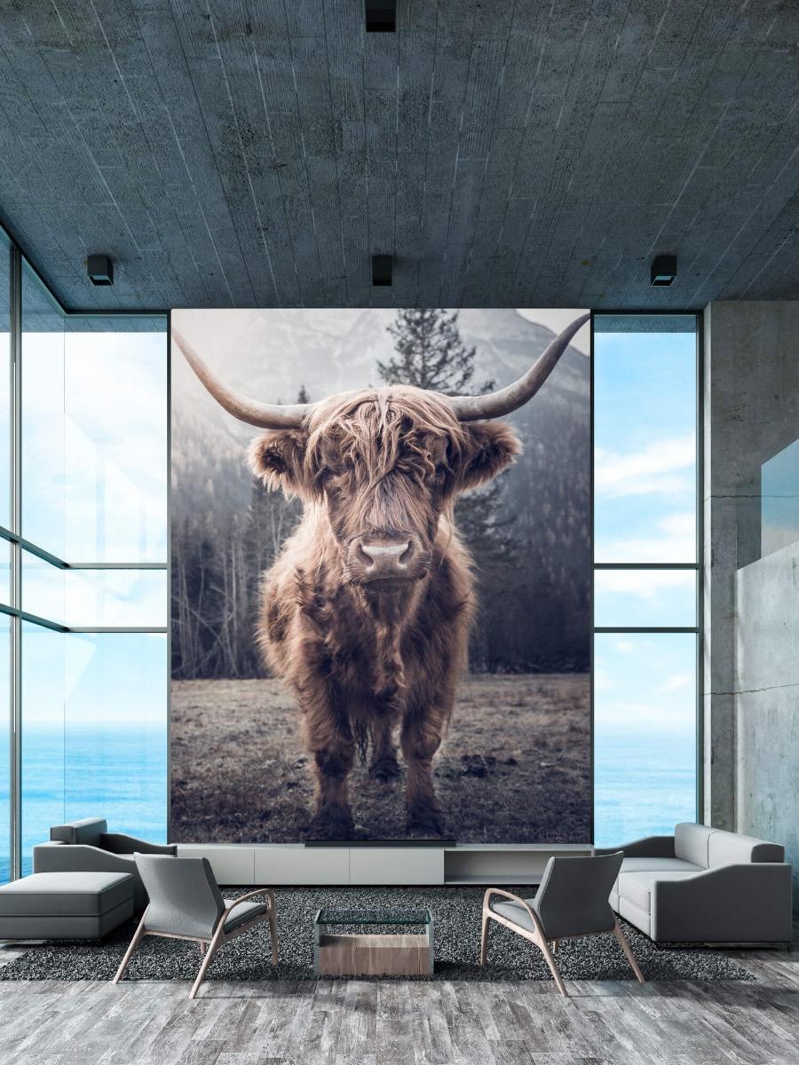 Hooglanders - Schotse hooglander bij het bos - Hal 10