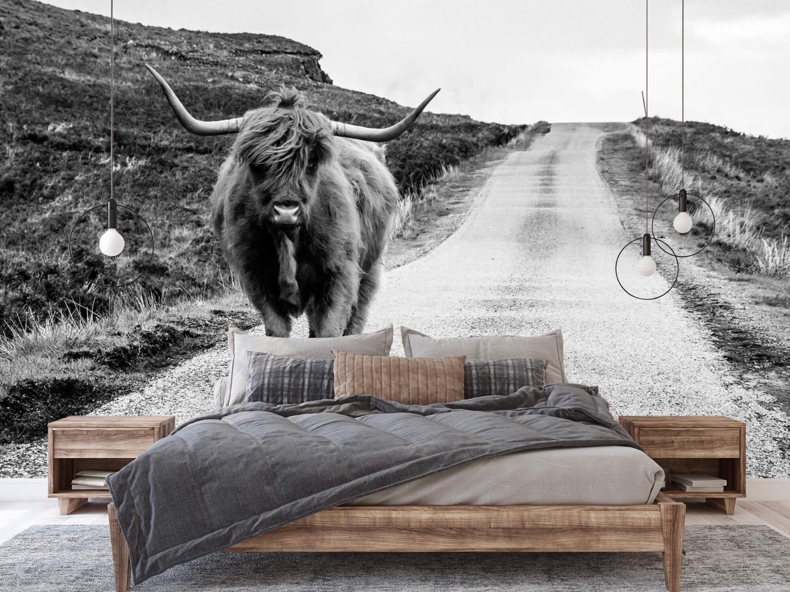 Hooglanders - Schotse hooglander op een weg - Slaapkamer 2