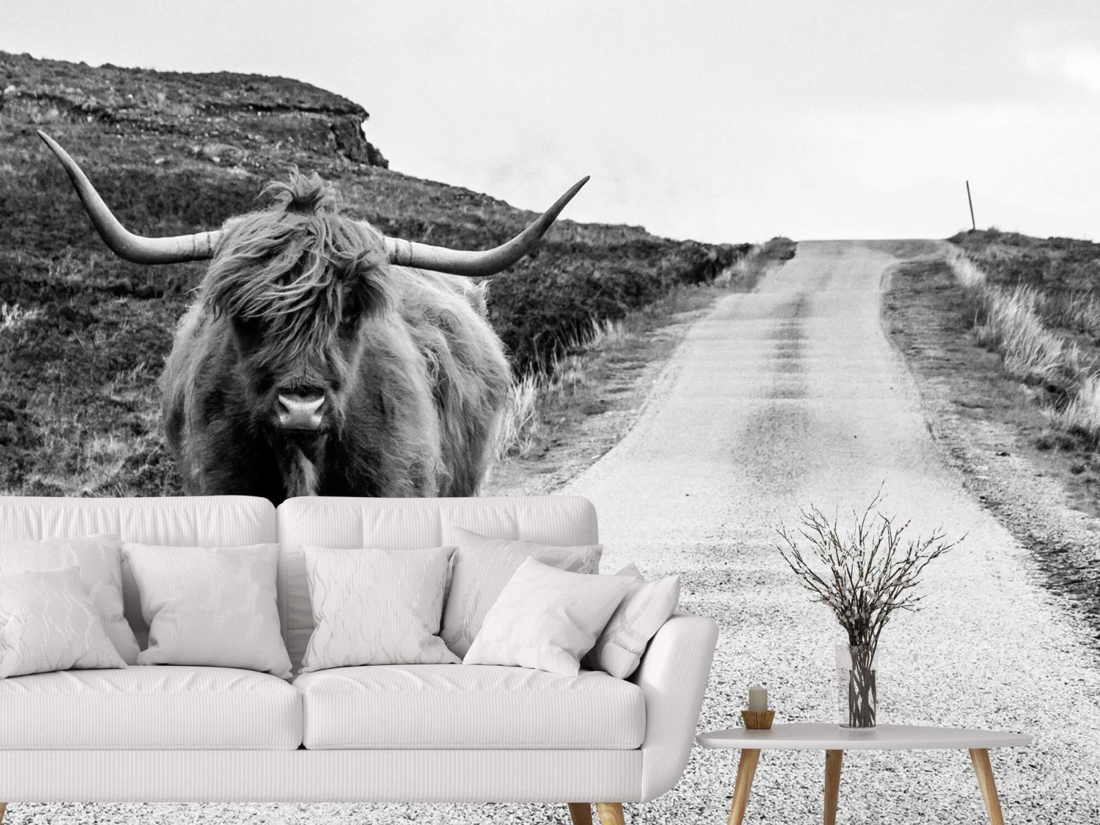 Hooglanders - Schotse hooglander op een weg - Slaapkamer 3