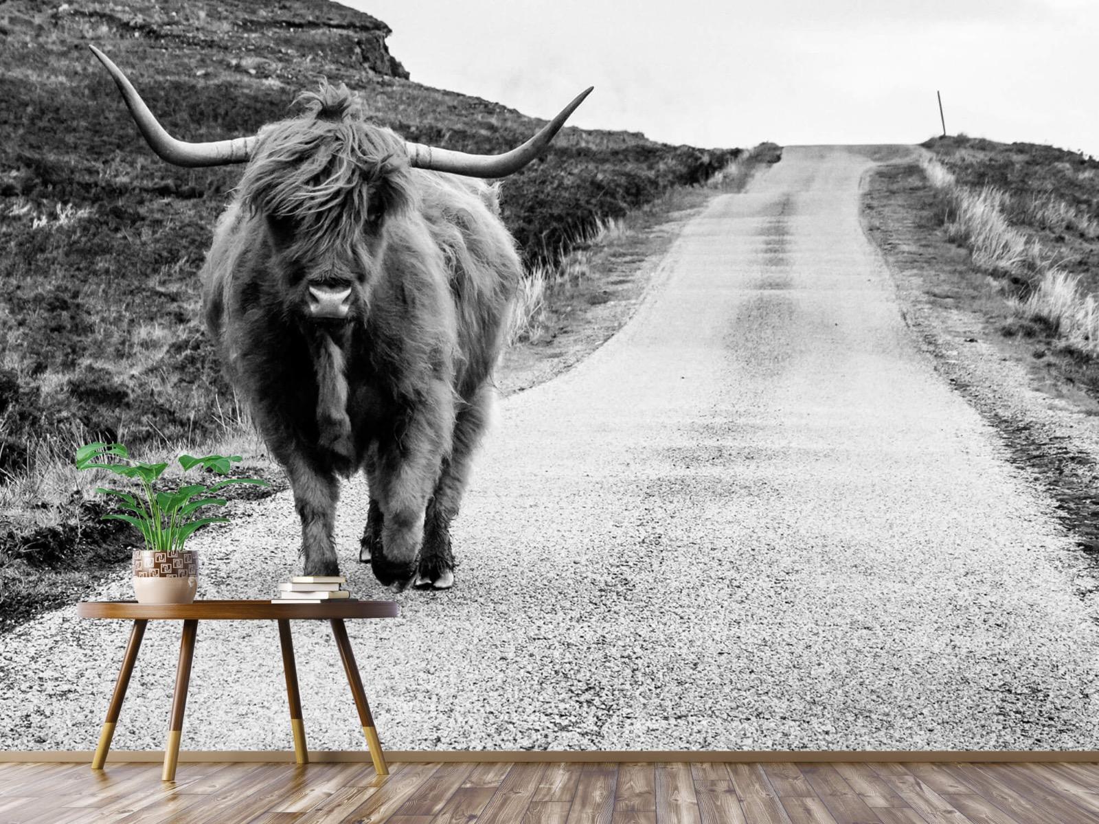 Hooglanders - Schotse hooglander op een weg - Slaapkamer 4