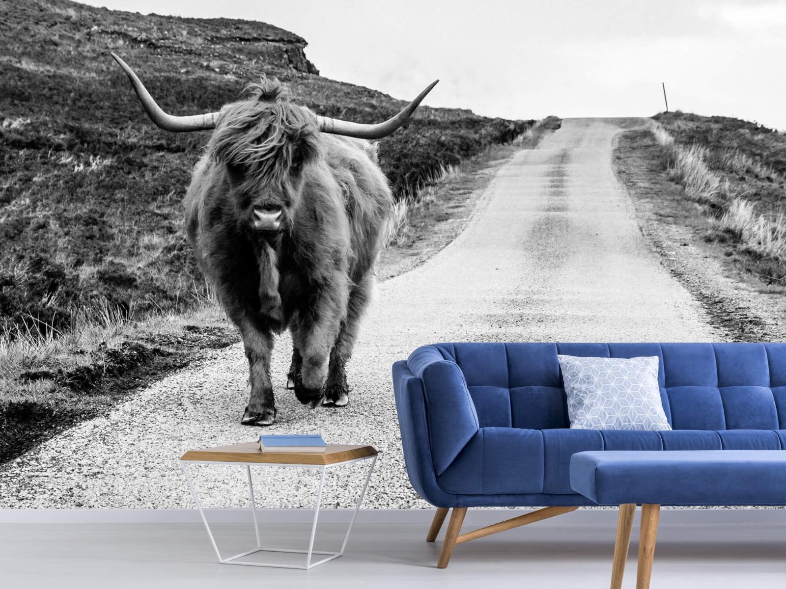 Hooglanders - Schotse hooglander op een weg - Slaapkamer 5