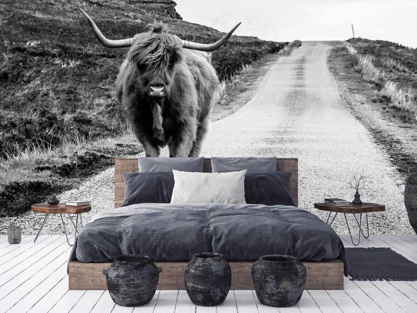 Hooglanders - Schotse hooglander op een weg - Slaapkamer 6