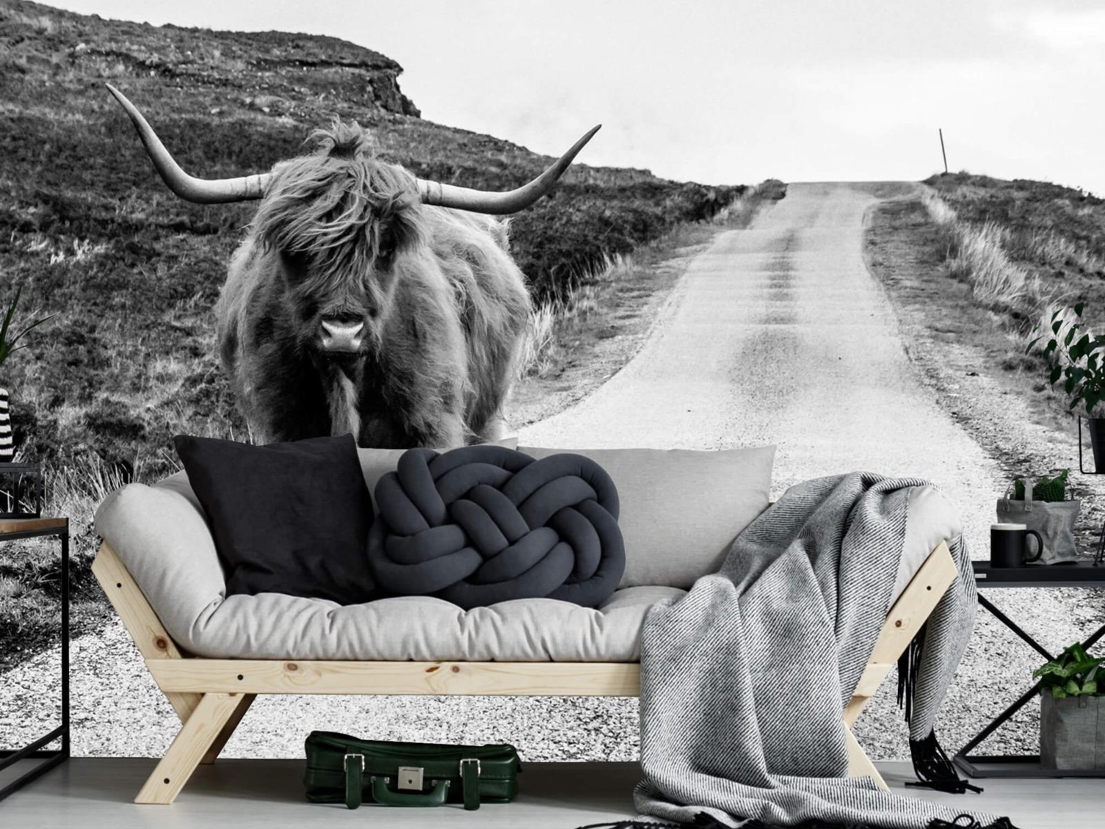 Hooglanders - Schotse hooglander op een weg - Slaapkamer 7