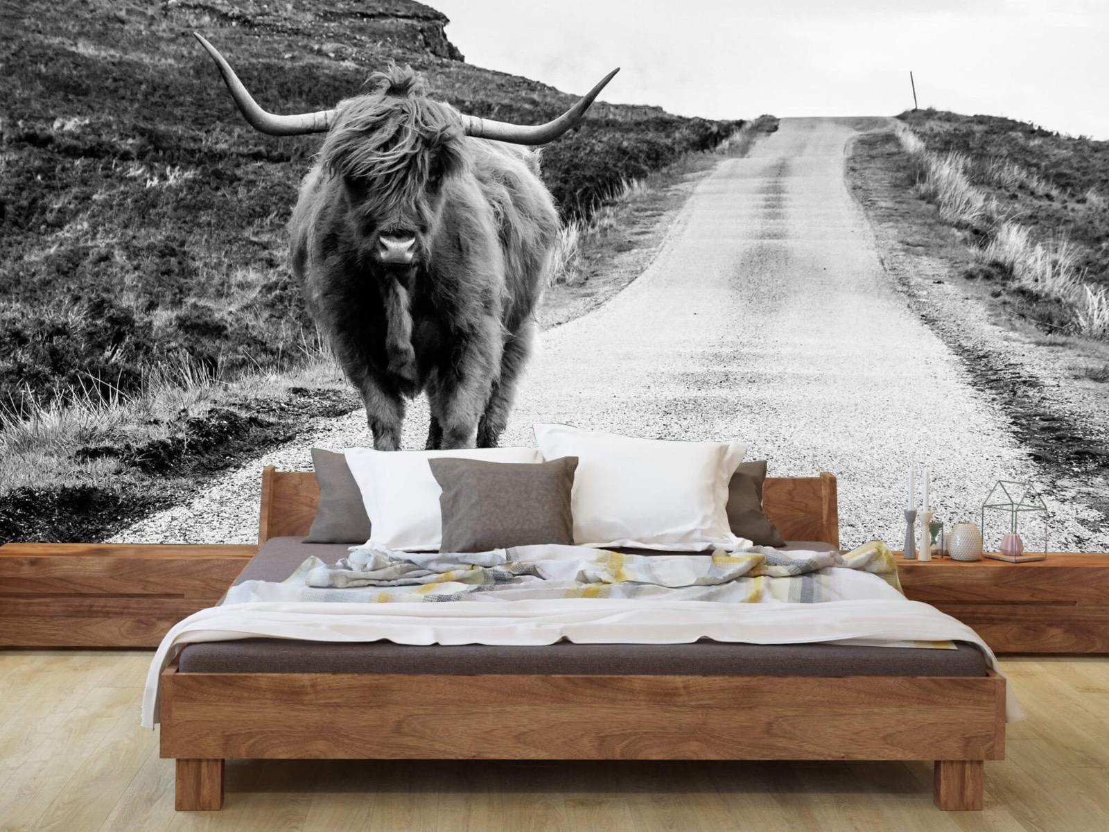 Hooglanders - Schotse hooglander op een weg - Slaapkamer 8