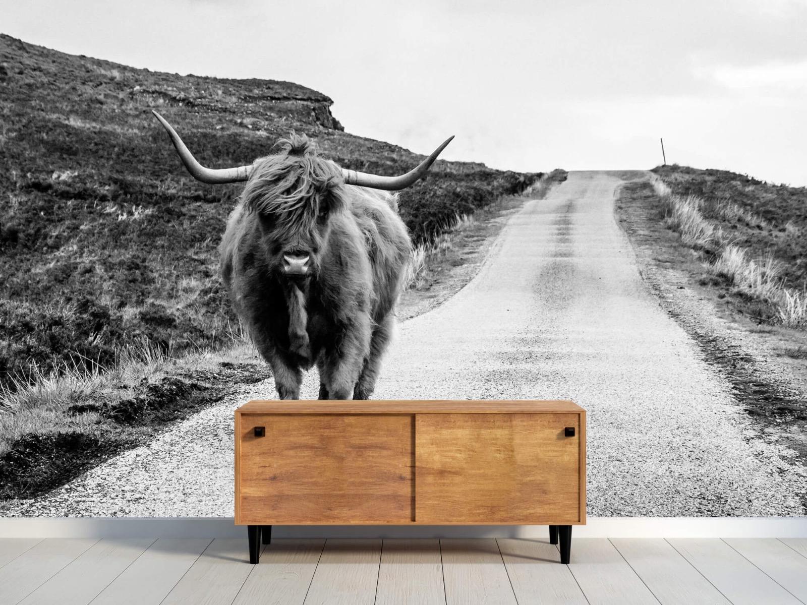 Hooglanders - Schotse hooglander op een weg - Slaapkamer 10
