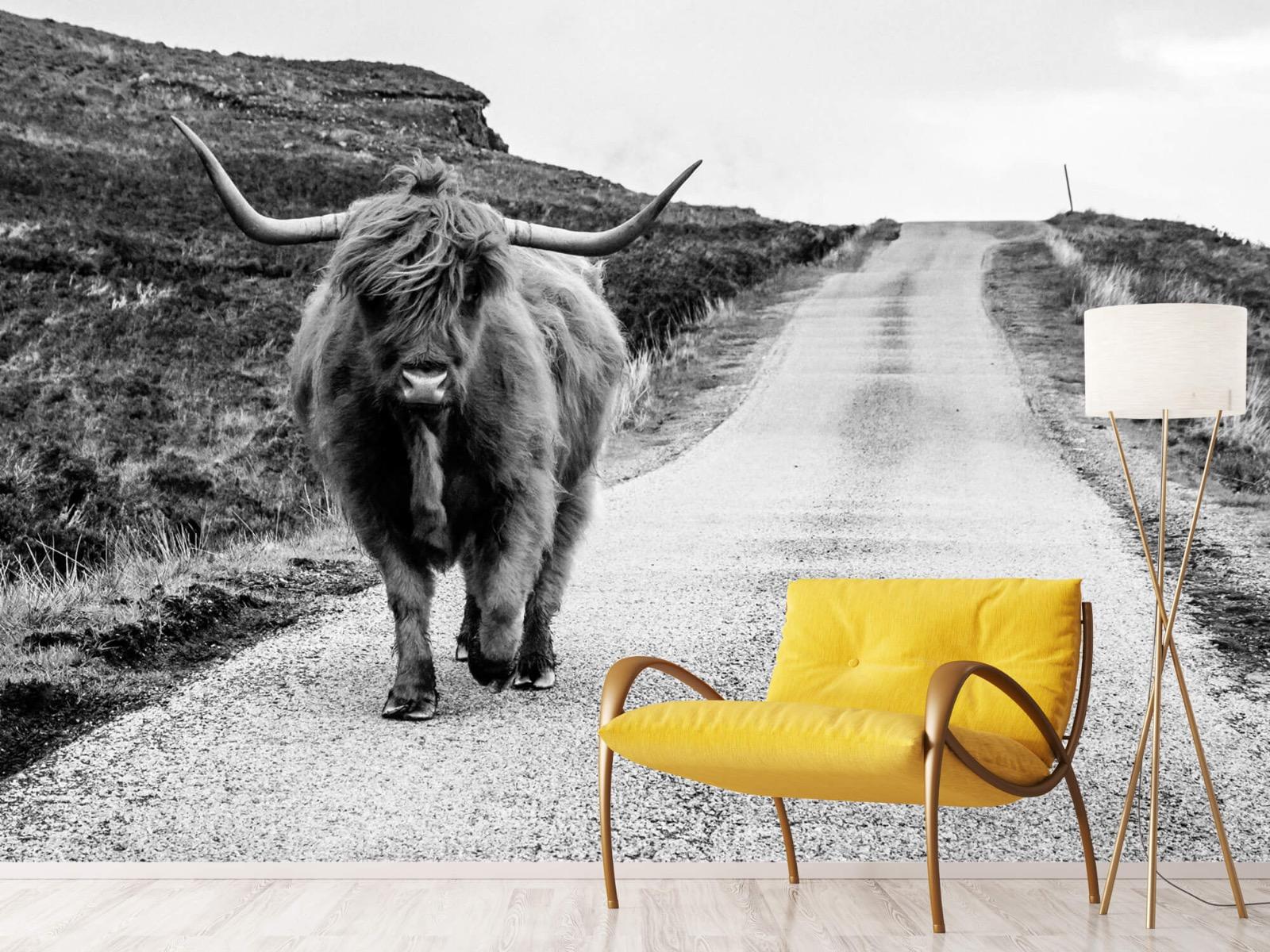 Hooglanders - Schotse hooglander op een weg - Slaapkamer 11