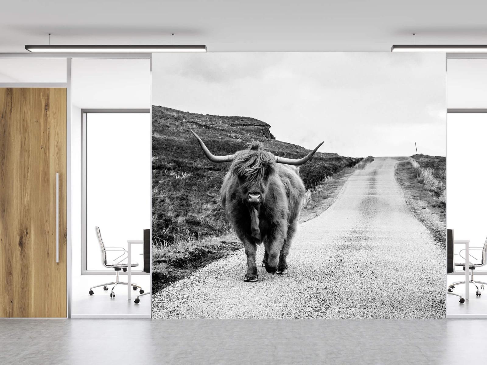 Hooglanders - Schotse hooglander op een weg - Slaapkamer 12