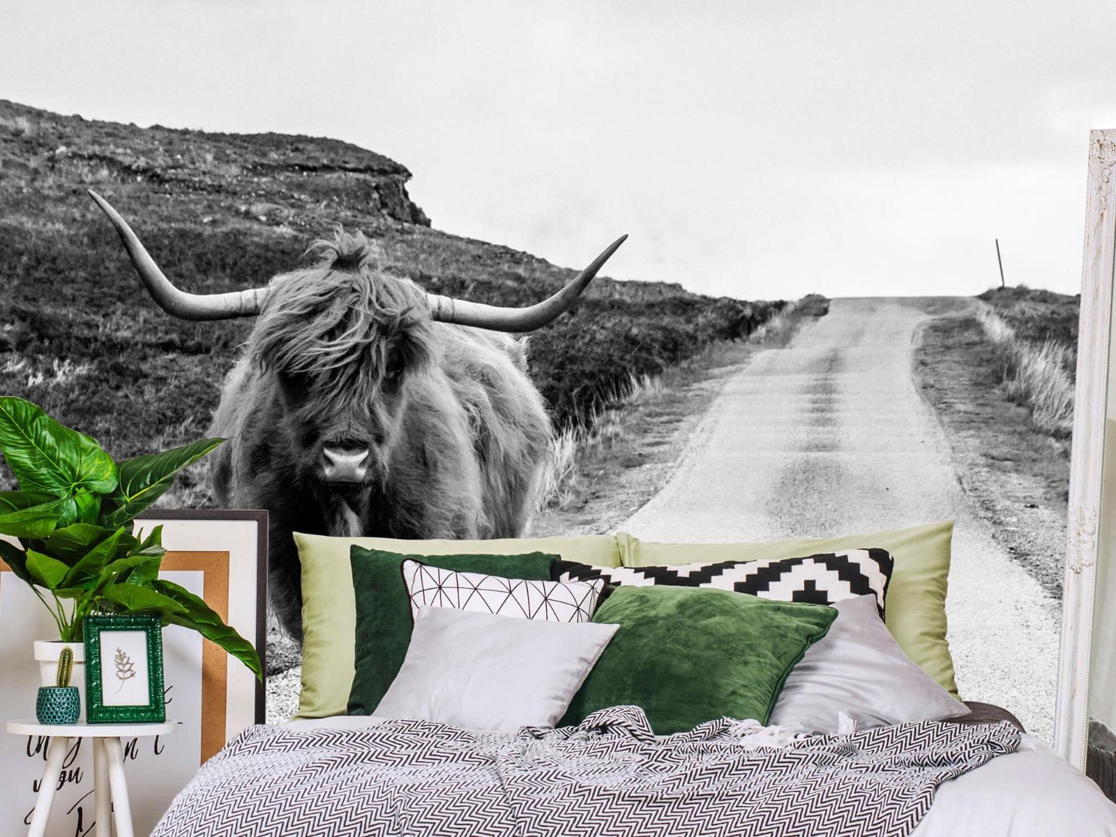 Hooglanders - Schotse hooglander op een weg - Slaapkamer 13