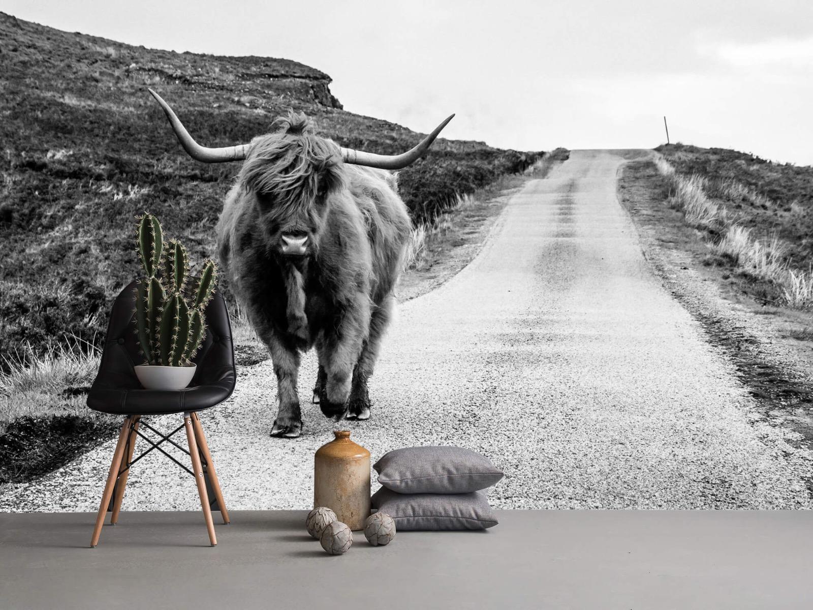 Hooglanders - Schotse hooglander op een weg - Slaapkamer 14