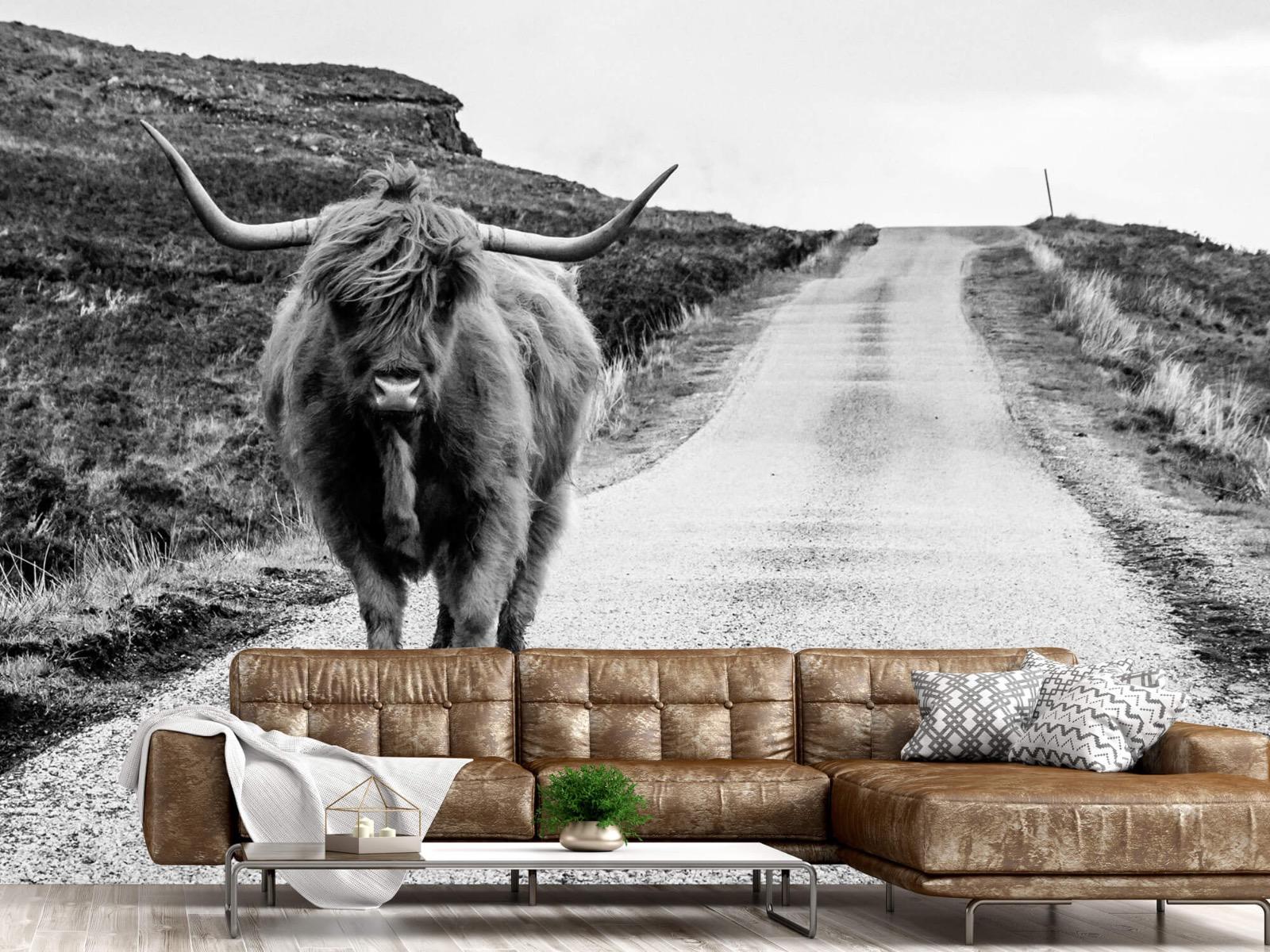 Hooglanders - Schotse hooglander op een weg - Slaapkamer 1