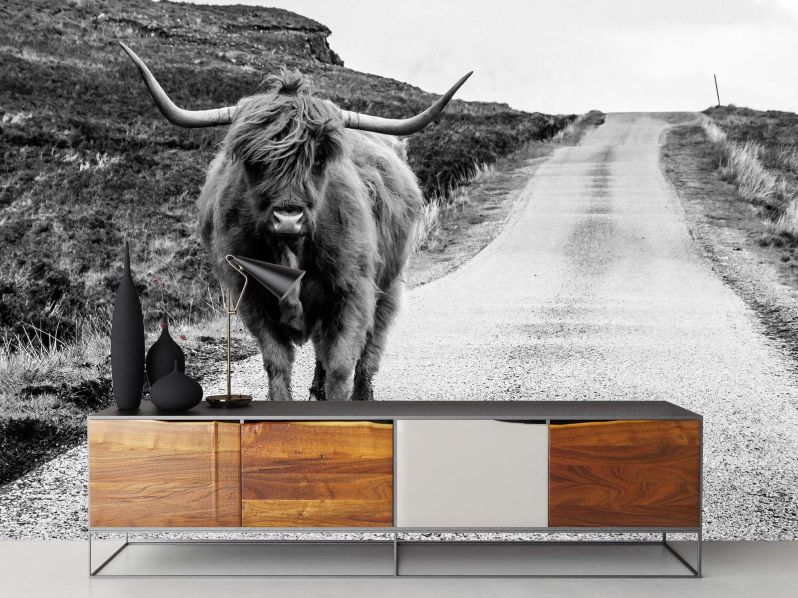 Hooglanders - Schotse hooglander op een weg - Slaapkamer 16