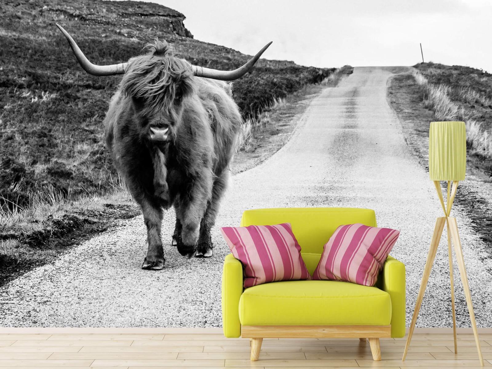 Hooglanders - Schotse hooglander op een weg - Slaapkamer 17