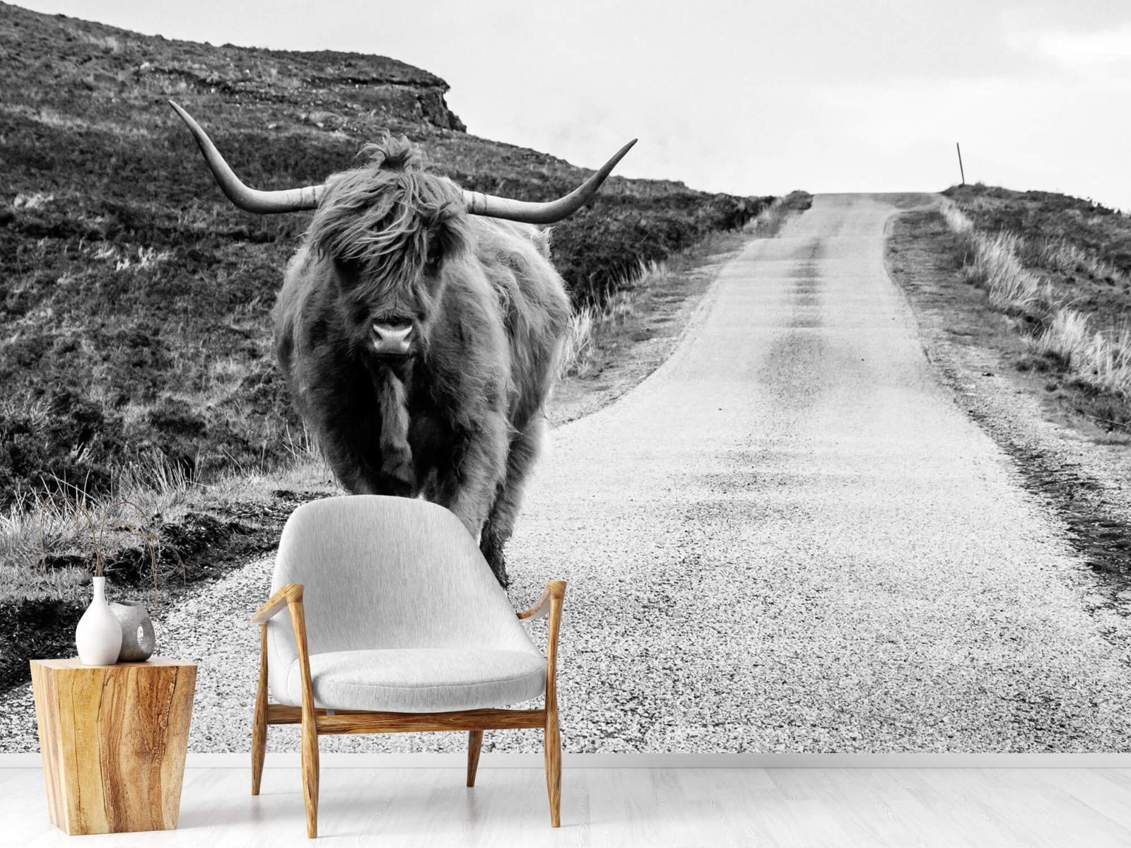 Hooglanders - Schotse hooglander op een weg - Slaapkamer 18