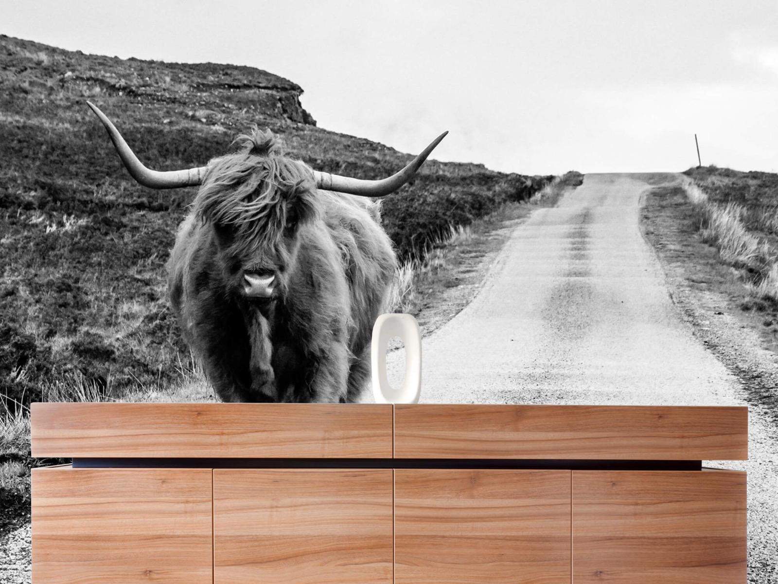 Hooglanders - Schotse hooglander op een weg - Slaapkamer 20