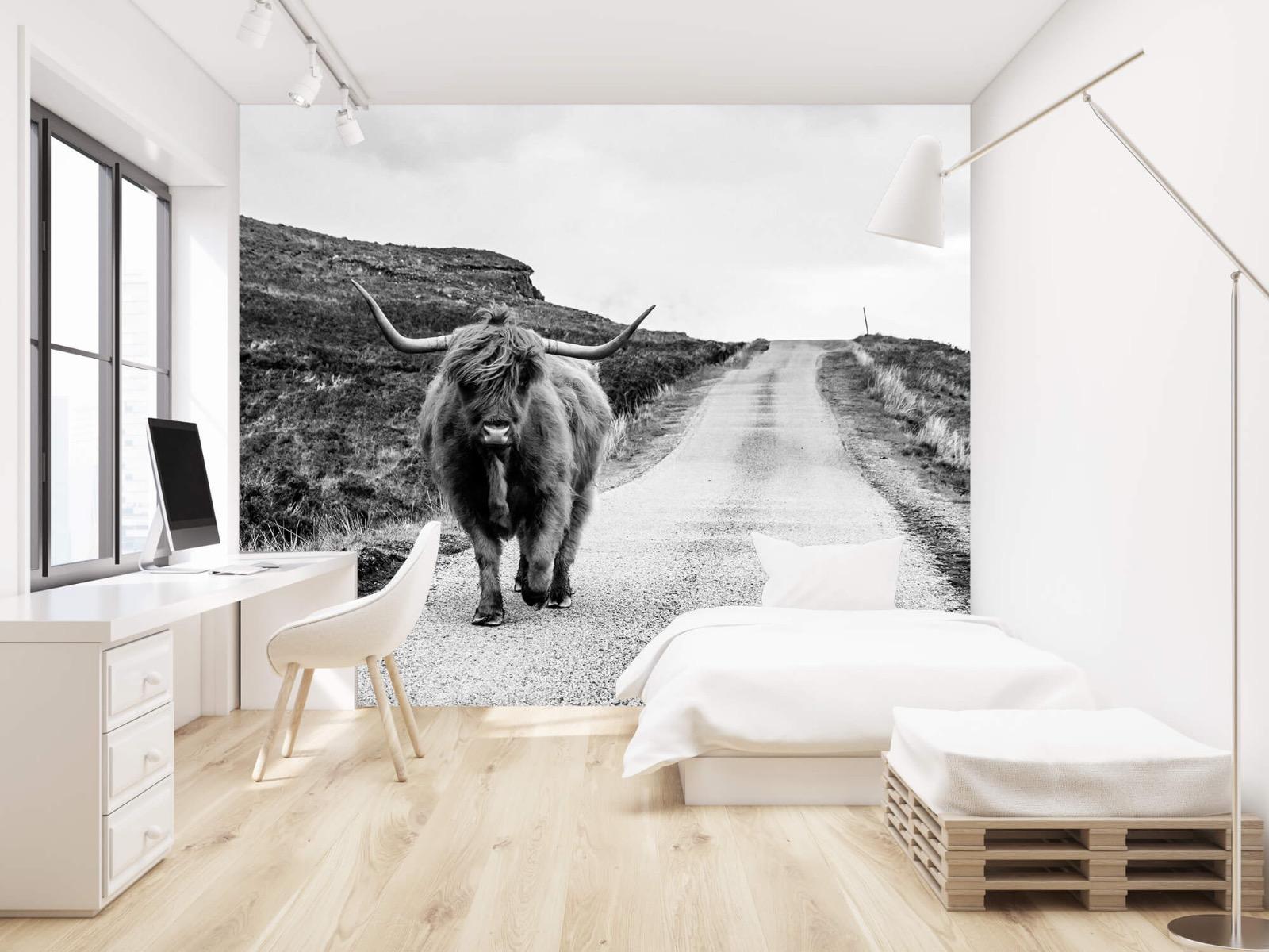Hooglanders - Schotse hooglander op een weg - Slaapkamer 22