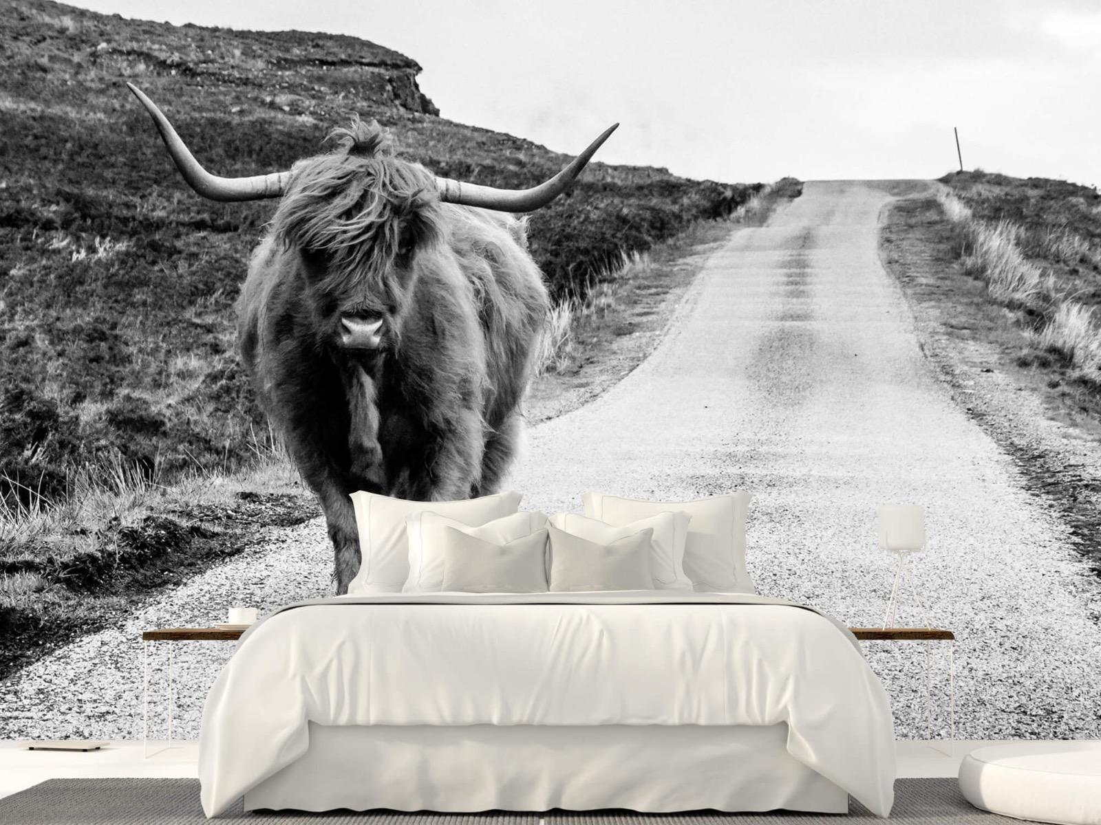 Hooglanders - Schotse hooglander op een weg - Slaapkamer 23