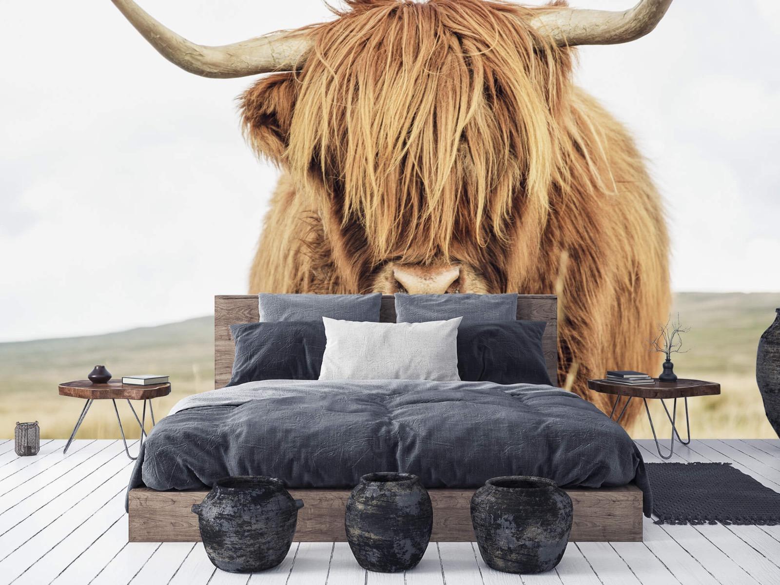 Hooglanders - Close-up van een Schotse hooglander - Keuken 5