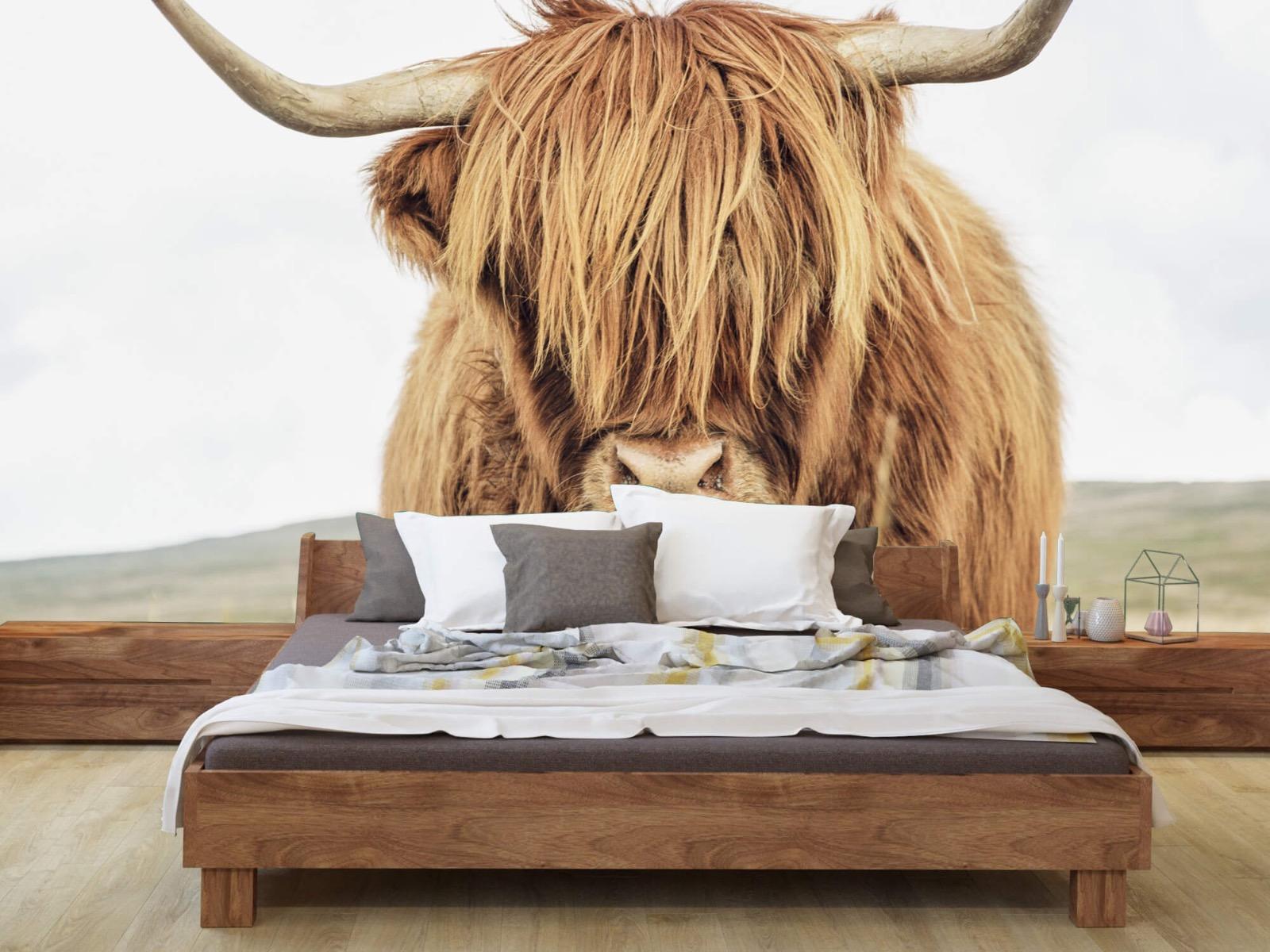 Hooglanders - Close-up van een Schotse hooglander - Keuken 7