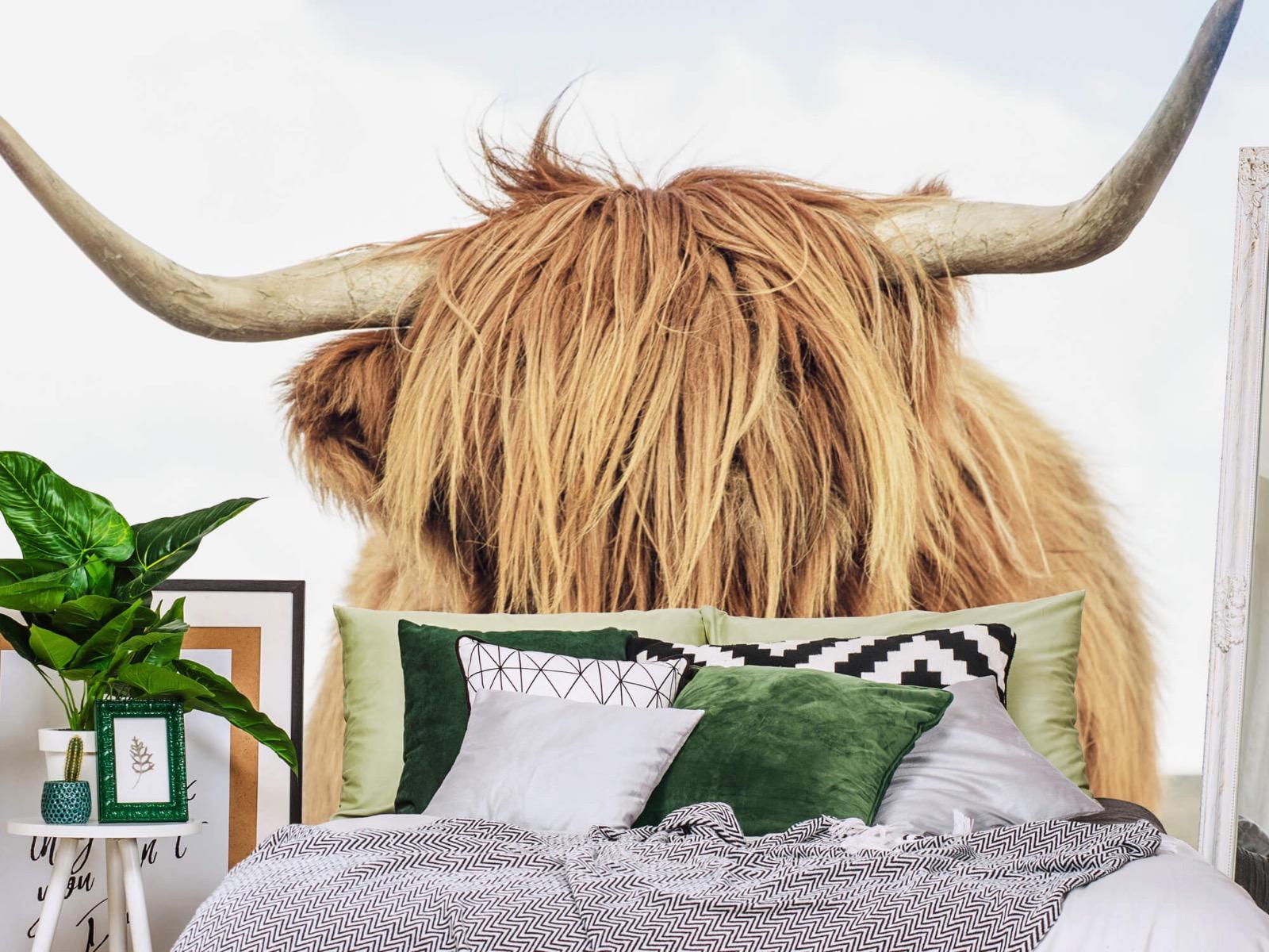 Hooglanders - Close-up van een Schotse hooglander - Keuken 12
