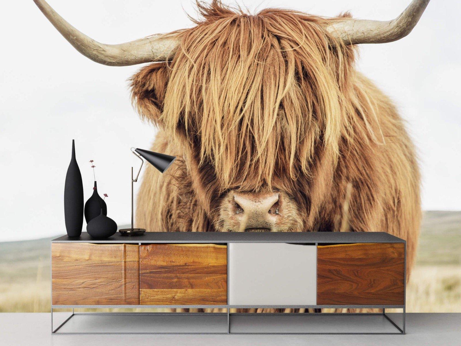 Hooglanders - Close-up van een Schotse hooglander - Keuken 16