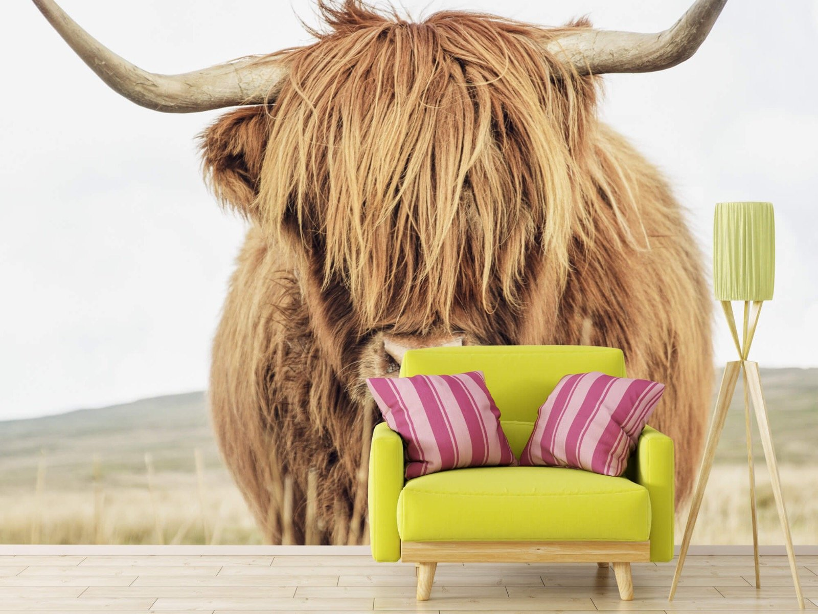 Hooglanders - Close-up van een Schotse hooglander - Keuken 17