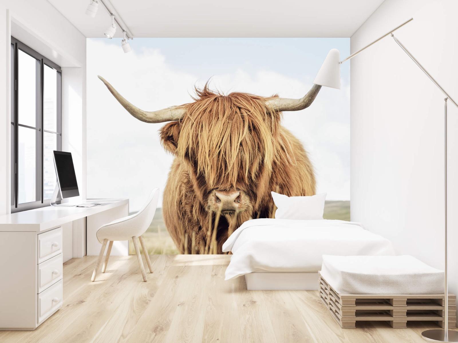 Hooglanders - Close-up van een Schotse hooglander - Keuken 22